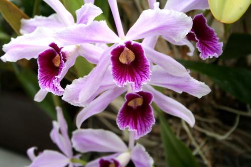 orchideen faszinierende bl ten und interessante pflanzen. Black Bedroom Furniture Sets. Home Design Ideas